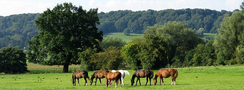 tier-pferde2