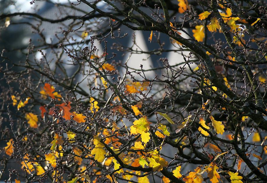 Herbstverliebt